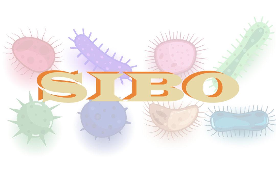¿Qué es SIBO? Conociendo el Sobrecrecimiento bacteriano en el Intestino Delgado